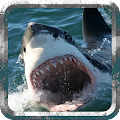 Game Angry Shark - Wild Attack version 2015 APK