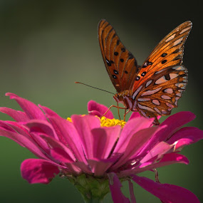 Summer Time Beauty by Larry Bidwell - Animals Insects & Spiders