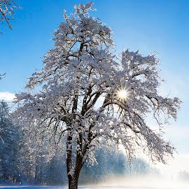 Snowy morning by Boris Podlipnik - Landscapes Weather ( snow, fog clouds, snowy morning, morning, sun )