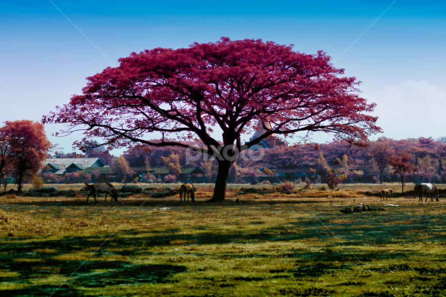 Horse Tree by Nanto 사파이어 - Nature Up Close Trees & Bushes ( false color, tree, color, horse, false )
