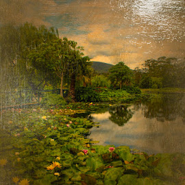 The Lilly Pond  by Kathryn Potempski - Digital Art Places ( lillies, waterscape, lilly pond, digital manipulation, digital art, digital painting, digital photography, landscape, digital )