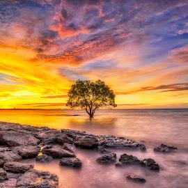 Silent sunset by Pratiwanjono Pratiwanjono - Landscapes Beaches ( silent, tree, sunset, sunrise, beach )
