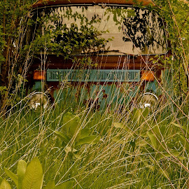 Peek A Boo by Wally VanSlyke - Transportation Automobiles ( car, henry co in, vw, van, bus, vintage, automobile, midwest, relic, antique, volkswagon )