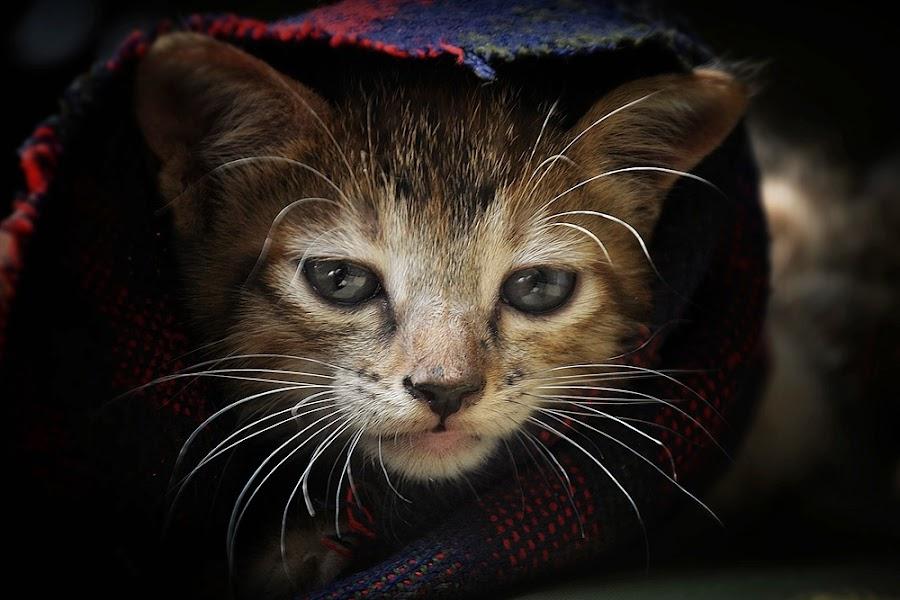 by Abbiel Tonny - Animals - Cats Kittens