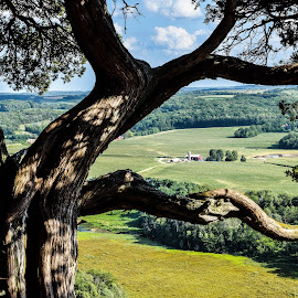 Gibralter Rock area farm by Jason Lockhart - Landscapes Prairies, Meadows & Fields ( farm, wisconsin, gibralter rock natural area, tree, high bluff, lodi )