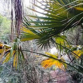 Gardenscape 1 by Gail Marsella - Nature Up Close Gardens & Produce ( green, san diego botanical garden, yellow, rocks, garden )