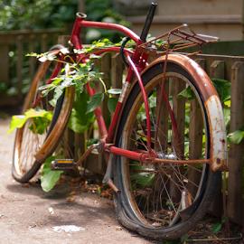 Old bike by Luc Bussieres - Transportation Bicycles ( été, paysage, montréal, type, québec, rouille, plateau mont-royal, vélo, trottoir, contenu, habitation, véhicule, clôture, plante, saison, localisation,  )