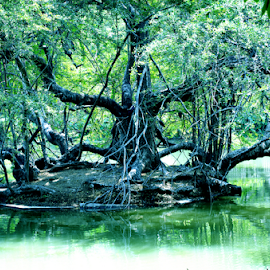 Tree in island by Anindya Karmakar - Nature Up Close Trees & Bushes ( water, tree, shadow, branch, day )