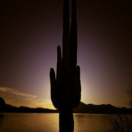 The Days End  by Deb Bulger - Landscapes Deserts ( android, waterscape, sunset, silhouette, lake, landscape, cactus,  )