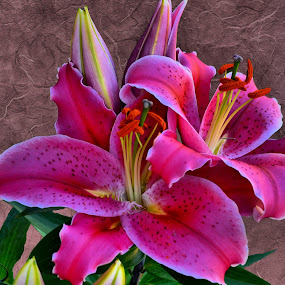 Pretty In Pink by Kristen O'Brian - Nature Up Close Flowers - 2011-2013 ( plant, lily, pink, flower )