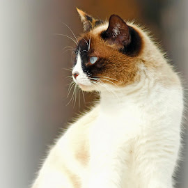 by Ian Fearn - Animals - Cats Portraits