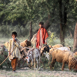 Shepherds  by Abdul Rehman - People Street & Candids ( goats, shepherd, sheep, shepherds, rural )