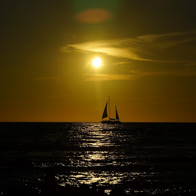 by Sandra Cannon - Transportation Boats ( sailboat sunset )