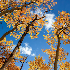 by Jason Kiefer - Nature Up Close Trees & Bushes ( kenosha pass )