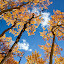 by Jason Kiefer - Nature Up Close Trees & Bushes ( kenosha pass )