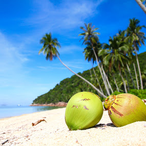 Coconuts by the beach by Tan  Kian Yong - Landscapes Beaches ( holiday, sand, retreat, vacation, coconuts, tropical, trees, beach, tropics )