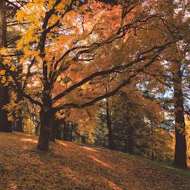 Stretched Dreamz by Madhujith Venkatakrishna - Nature Up Close Trees & Bushes