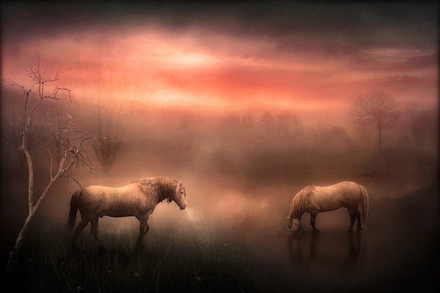 Freedom to Roam by Jennifer Woodward - Digital Art Places ( animals, horses, nature, horse, wildlife )