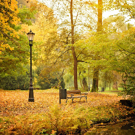Bench and lantern by Witold Steblik - City,  Street & Park  City Parks ( water, lantern, bench, park, autumn, yellow, leaves, landscape )