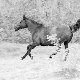 Horse by Elvis Pažin - Animals Horses ( panning, horse running, pet, horse, animal )