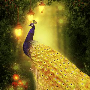 Золотой павлин королева
