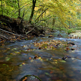 by Siniša Almaši - Nature Up Close Water ( hunting the light gallery, water, up close, stream, forest, landscape, depth, colours, leafs, nature, tree, autumn, view, stones, river )