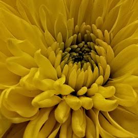 OLD flower 08 U3A by Michael Moore - Flowers Single Flower (  )