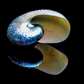 nautilus by Adjie Tjokrosoedarmo - Artistic Objects Still Life ( seashell, sea, nautilus, beach )