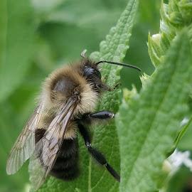 The bee's leaves  by Sean Brett - Uncategorized All Uncategorized ( bees, lovelettertobees, savethebees )