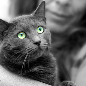 Cozy Cat by Debby  Raskin - Animals - Cats Portraits ( cat, feline, animal )
