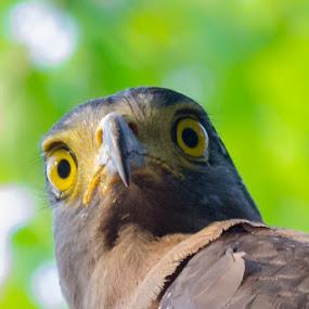 || Angry || by Indra Maji - Animals Birds