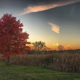 Deep color of fall by Patti Pappas - Landscapes Prairies, Meadows & Fields ( michigan, fall colors, autumn leaves', tree, autumn, sunset, fall )