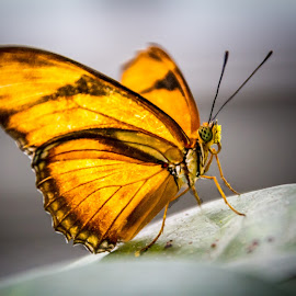 Butterflies of the Philippines by Scott Opp - Novices Only Macro ( butterfly )