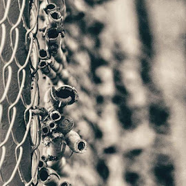Fences  by Chilene Verheem - Abstract Macro