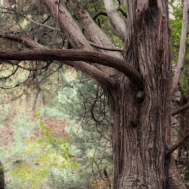 by Lori Rose - Nature Up Close Trees & Bushes