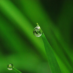 water drup by Jade Bracke - Nature Up Close Water ( water, water drops, nature, green, photography )