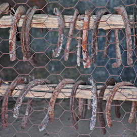 Horseshoes by Annette Lagunas - Artistic Objects Other Objects ( horseshoes, horse life, rusty, old horseshoes, get the horse )