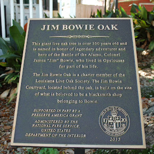 This giant live oak tree is over 350 years old and is named in honor of legendary adventurer and hero of the Battle of the Alamo, Colonel James