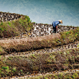 Planting the Rice Tarrace by David Long - People Street & Candids ( longji, guilin, rice terrace )
