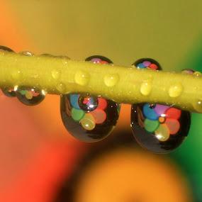 || AFTER RAIN || by RazeeAsada Akimura - Nature Up Close Flowers - 2011-2013