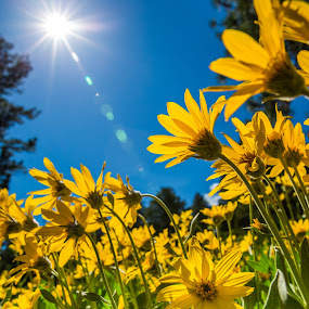Here Comes The Sun by Billy Brooks - Nature Up Close Flowers - 2011-2013