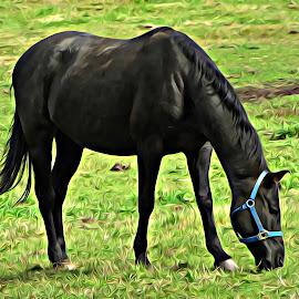 Black Horse by Irina Aspinall - Digital Art Animals ( farm, horse, vermont, black horse )