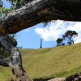 One tree hill  by Elise Graham - Buildings & Architecture Statues & Monuments ( field, monuments, tree, trees, monument )