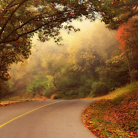 OCTOBER MORNING by Dana Johnson - Landscapes Forests ( fog, autumn, drive, fall, forest, landscape )