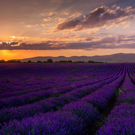 by Ева Шумкова - Landscapes Sunsets & Sunrises ( beautifull, sunset, landscapes, flowers, lavander fields, fields )