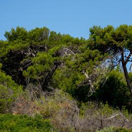 by Dušan Gajšek - Nature Up Close Trees & Bushes