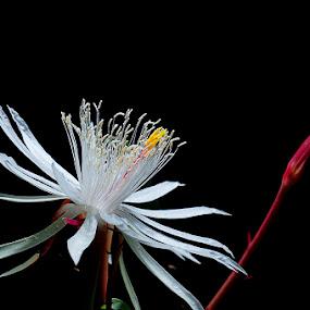 by Martin Marthadinata - Nature Up Close Flowers - 2011-2013 (  )