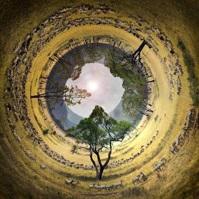 Zebra's World by Alberto Ghizzi Panizza - Digital Art Places ( savannah, serengeti, safari, zebra, circle, tanzania, africa, panorama, 360 )