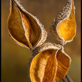 Empty Nest by Jon Kinney - Nature Up Close Other plants ( milkweed )