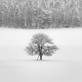 Alone by Jíra Štekl - Landscapes Forests